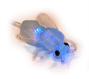Blue Fly