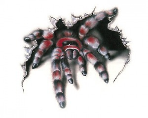 Spider WildGraphic Liten - Dekal