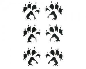 Kattspår - Stickers
