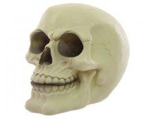 Skull - Glow in the Dark